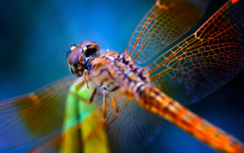 A Guide to the Dragonfly Meaning and Symbolism